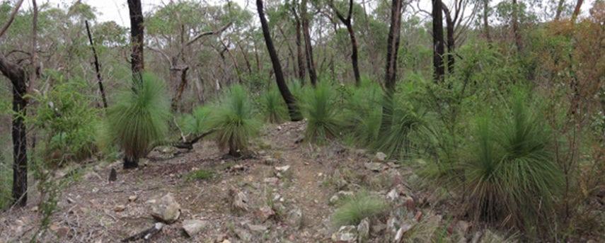 burchell-trail