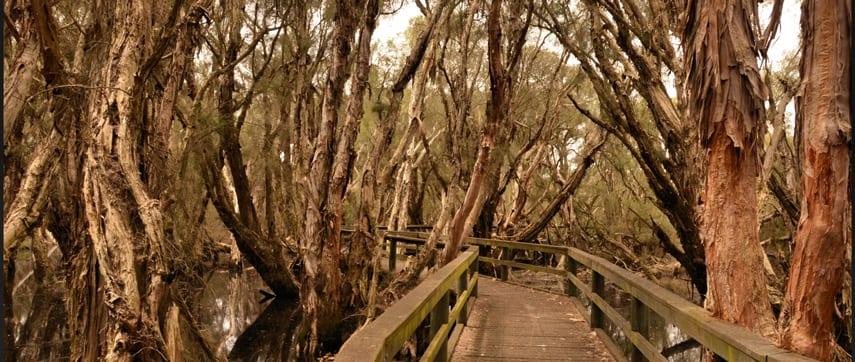 Spectacles Aboriginal Heritage Trail