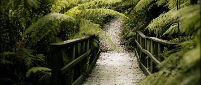 trail-hiking-mount-worth-2