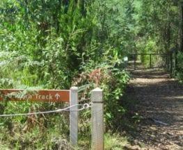 homeinvisagepublic_htmltrailhikingwp-contentuploads201606trail-hiking-boroondara-track.jpg