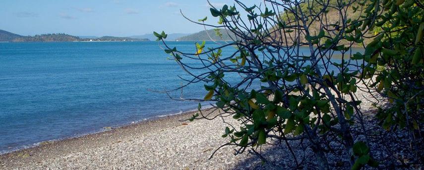 trail-hiking-coastal-fringe-and-hayward-gully