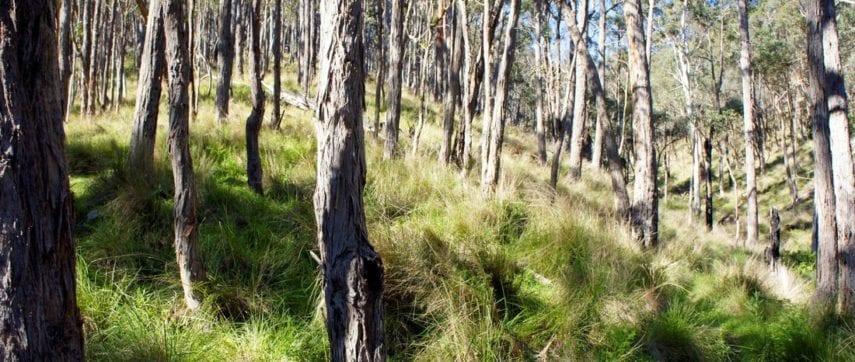 pyrenees endurance trail trail hiking australia. Black Bedroom Furniture Sets. Home Design Ideas