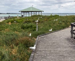 Penguin Island Boardwalk & Walk Trail