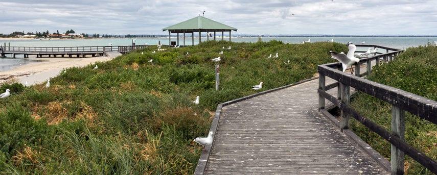 Penguin Island Boardwalk & Walk Trail