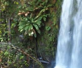 homeinvisagepublic_htmltrailhikingwp-contentuploads201610trail-hiking-beauchamp-falls.jpg