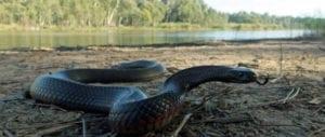 trail-hiking-snake-bites