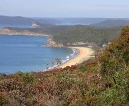 Bouddi Ridge and Coastal Walk