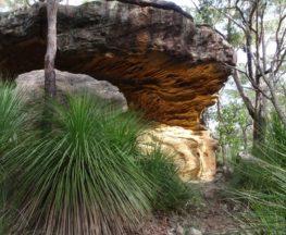 Callicoma caves