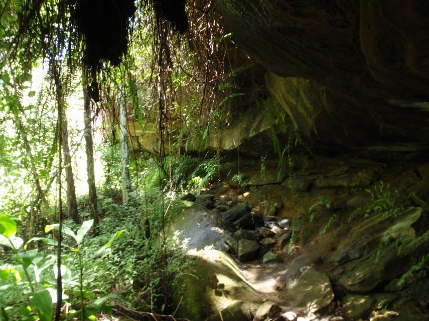 Casuarina and Carroll Creek Tracks