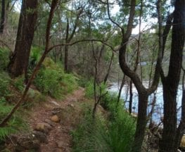 Darri and Warrimoo Tracks to Mt Kuring-gai