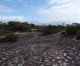 Elvina Bay Aboriginal Engraving Walk