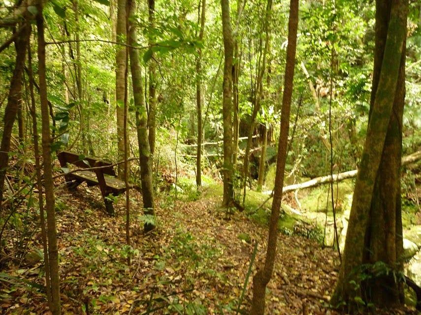 Gap Creek Rainforest Walk