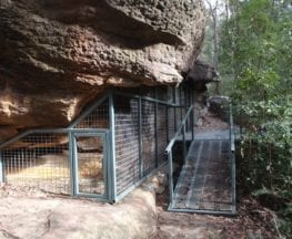 Glenbrook to Red Hands Cave (via Jellybean Pool)