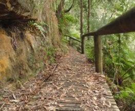 Guringai Walk