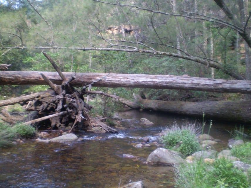 Katoomba to Wentworth Falls via the Jamison Valley