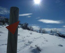 Mount Piper Trail