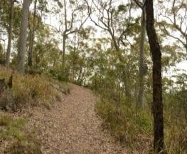 Mt Sugarloaf Green Track