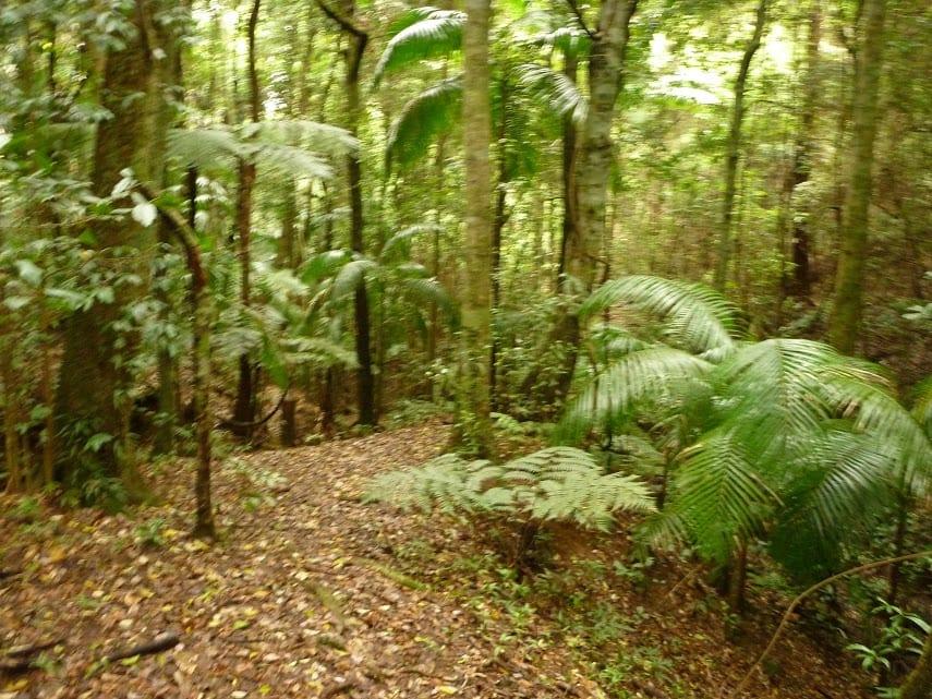 Muirs Rainforest Circuit Walk