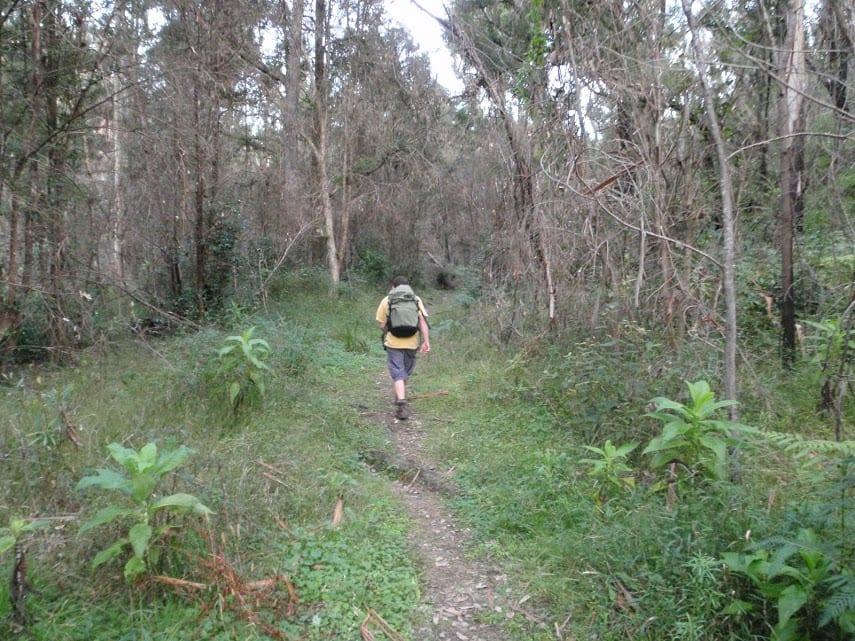 Pierces Pass to Blue Gum Forest