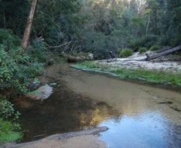 Popran Creek from Peats Ridge Rd