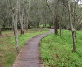 Rail to River and Stringybark Creek Reserve Walk