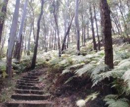 Rainforest walk to Nurrunga picnic area