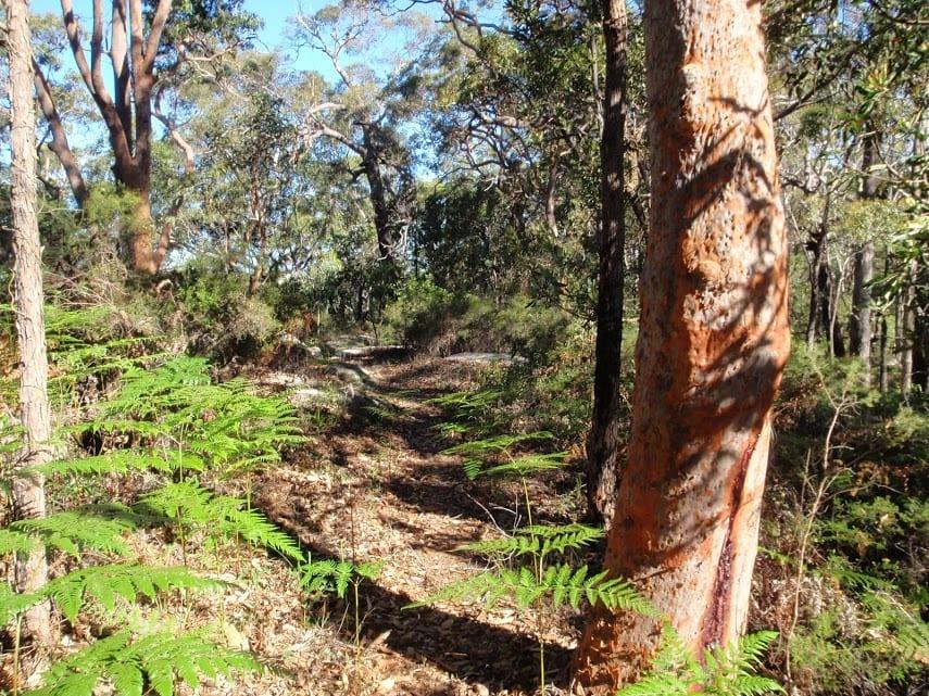 Ridge Trail loop