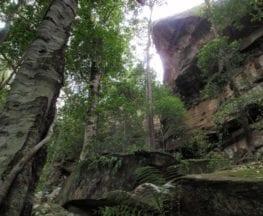 Strickland Falls Loop Trail