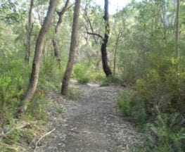 Stringybark Ridge loop via Bellamy St