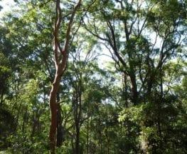 Tall Trees Circuit Walk