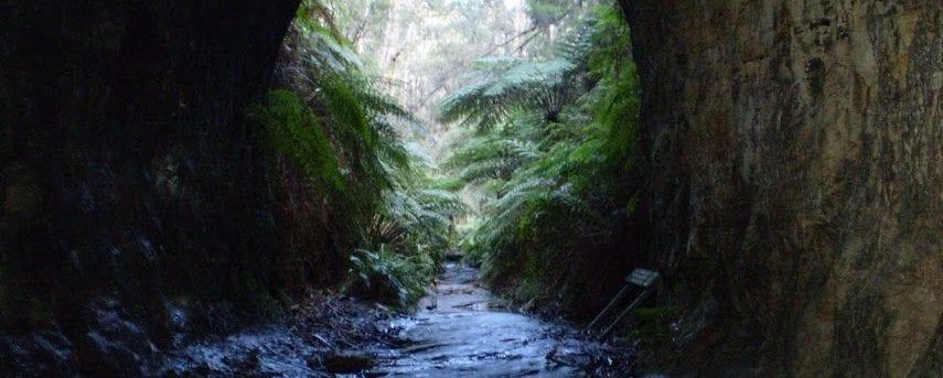 The Glow Worm Tunnel Walk