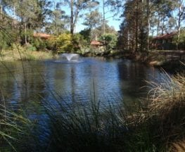 The Lakes of Cherrybrook loop