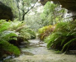 The Nayook Canyon Bushtrack