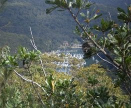 The Slade Lookout Track