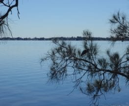 Tuggerah Lake vista and Rainforest