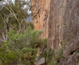 Walls Ledge (Long) Track
