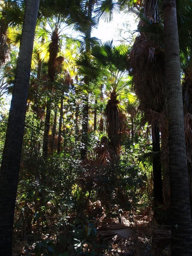 Wetland trail to Rainforest