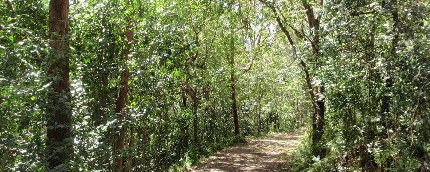 White St Rainforest loop