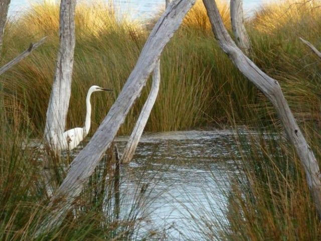 Baigup Wetland