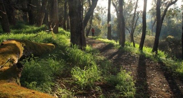 Blackwood River Walk