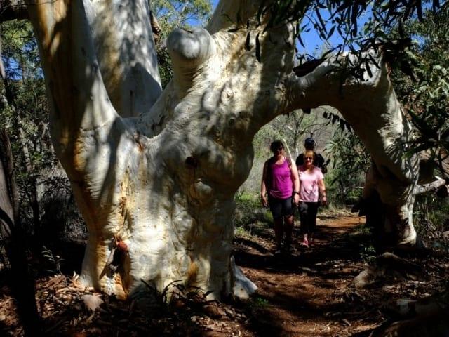Gum Grove Trail