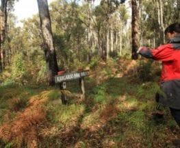 Kangaroo Paw Walk