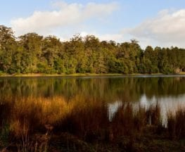 Karri Lake Trail