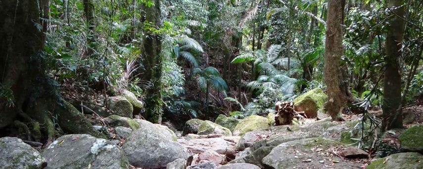 Lyrebird Trail