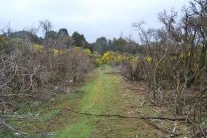 Magnet Mine Rail Trail