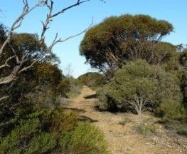Nurragi Conservation Reserve