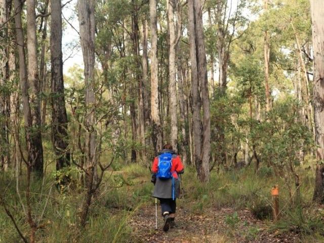 Possum Tree Walk