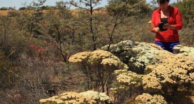 Reynoldson Reserve Walk Trail