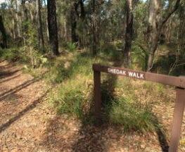 Sheoak Trail