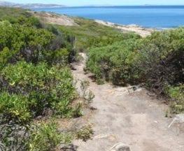 Skinny Dip Bay Walk